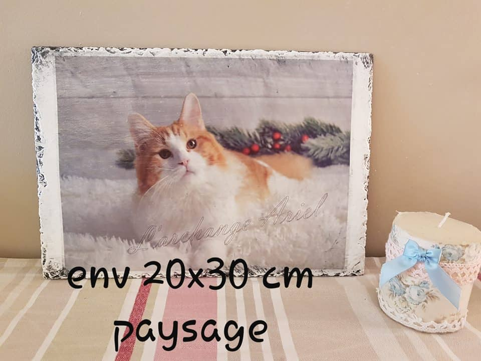 Customer's  Submission - Color photo print transfer onto wood - image with a cat
