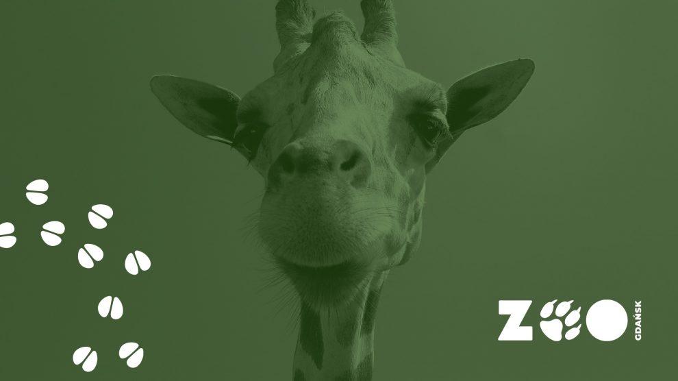 nowa identyfikacja zoo gdańsk stopy