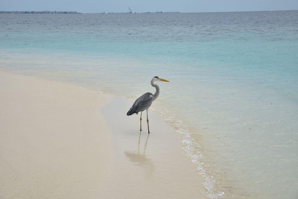 fotos-Maldivas