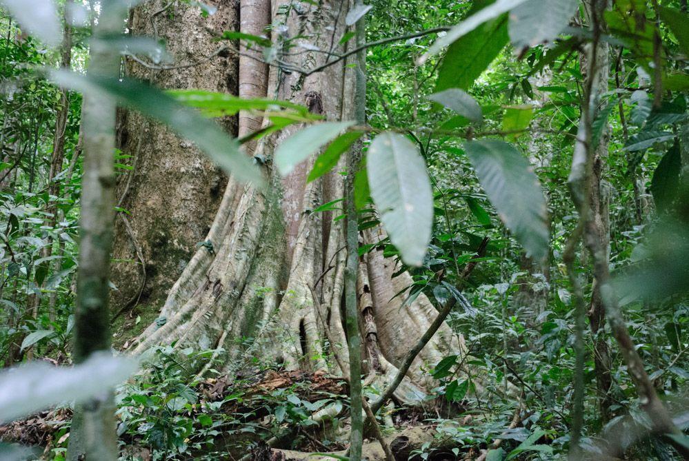 selva-Tailandia