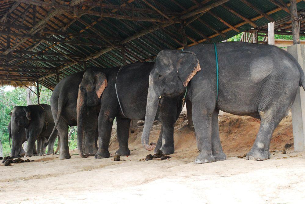 elefantes-Chiang-mai