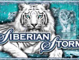 IGT – Siberian Storm