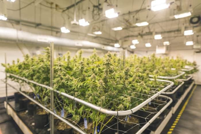 Farmako Indoor Cannabis