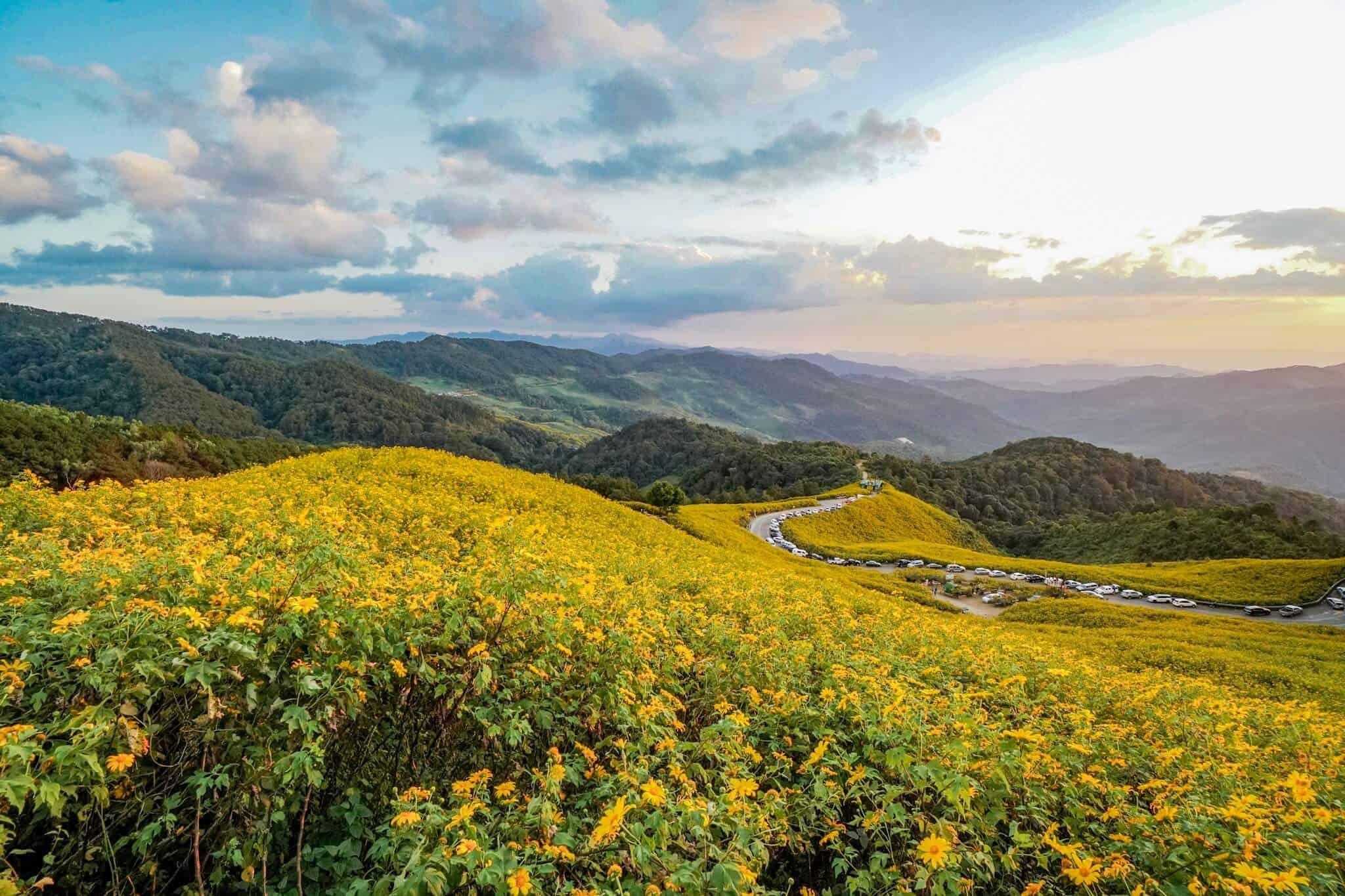 Sonnenblumen Mae Hong Son