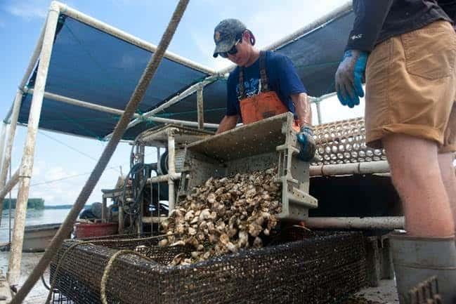 Orchard Point Oyster Company's Scott Budden