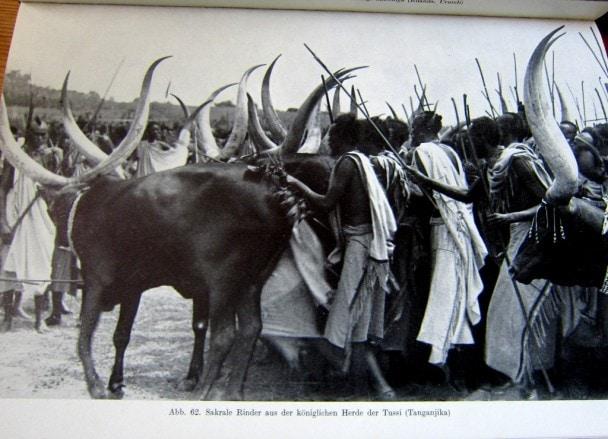 Tutsi - Tansania - Afrika - Neue große Völkerkunde