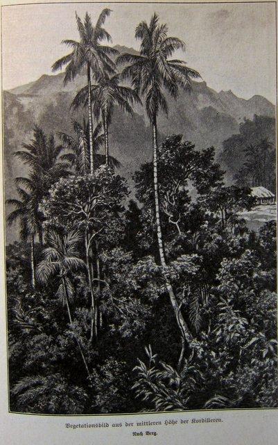 In den Kordillieren - Francisco Pizarro und die Eroberung von Peru