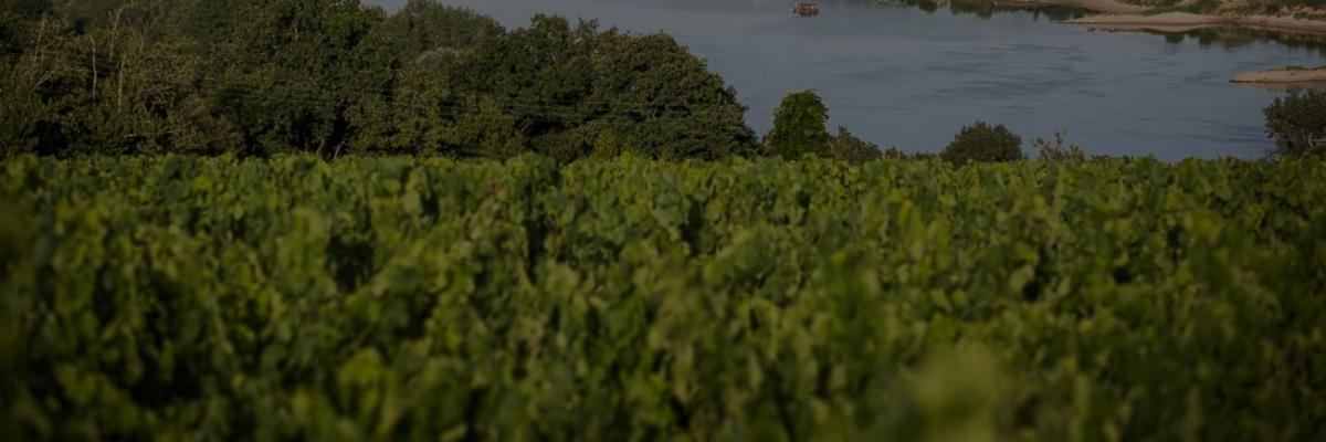 A la découverte des vins de la Loire