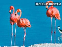 Фламинго в парке Рио Лагартос