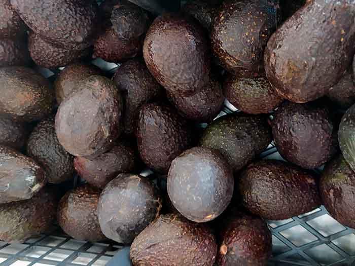 Овощи и фрукты Мексики: Авокадо