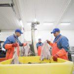 Productores islandeses compran una empresa de bacalao de Barcelona