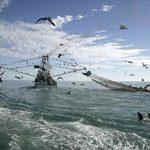 Oposición ecologista a la pesca eléctrica de los arrastreros de Países Bajos
