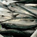 Escocia avanza una colaboración pesquera y científica modélica en Europa