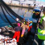 La flota artesanal comenzará el año con menores cuotas de verdel y merluza