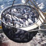Los atuneros piden a la distribución que vendan latas de empresas que ofrecen salarios dignos