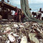 Smartfish cuenta con 7 millones de euros para mejorar la selectividad de especies