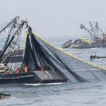Perú desarrolla la pesca de jurel desde la perspectiva de un stock propio