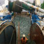 Los precios de pescado en primera venta y el volumen bajan el -23% y  el -22%
