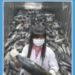 España dependerá del pescado de importación a partir del día 26 de mayo