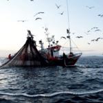 Una  Organización de Productores gallega crea su propia venta de pescado de cerco