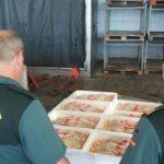 La lonja de A Coruña critica a la Guardia Civil por su acusación de comercializar cigala ilegal