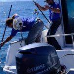 WWF pide a MSC que detenga la certificación actual del atún rojo y se exijan más controles y trazabilidad