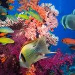 La FAO e Islandia firman una nueva alianza sobre pesca y conservación de ecosistemas