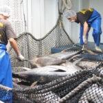 EL Gobierno confirma que los tripulantes de los pesqueros tendrán que fichar