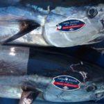 El atún rojo del Mediterráneo logra la eco-certificación de pesca sostenible