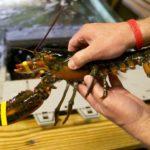 Pescadores de EE.UU piden ayudas para hacer frente la crisis del coronaviruos