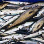 AZTI participa en una investigación para conocer los métodos predictivos en la pesca