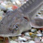 La población mundial de peces migratorios se ha derrumbado desde 1970