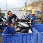 Futuro incierto para la pesca de túnidos canaria, tras el cierre de la campaña de bonito