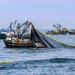 Perú suspende extracción de anchoveta entre Chimbote y Huarmey