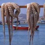 Publicado un estudio sobre la vida y ecología de los cefalópodos