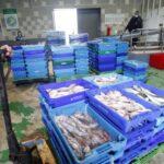Las ventas 'online' de pescado crecen un 200% en los puertos del Sur