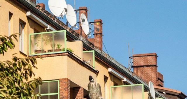 Wie Städte soziale Mischung im Quartier fördern – Ergebnisse der difu-Studie