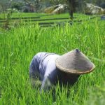 How to Stop Grass from Growing Fast