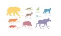 skogens-djur