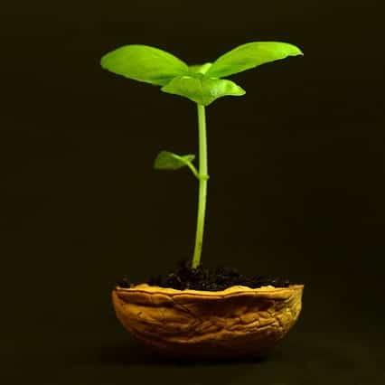 Neue Beziehung, kleine Pflanze