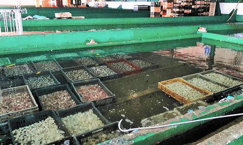 Instalaciones que albergan dos naves con piscinas para depurar moluscos