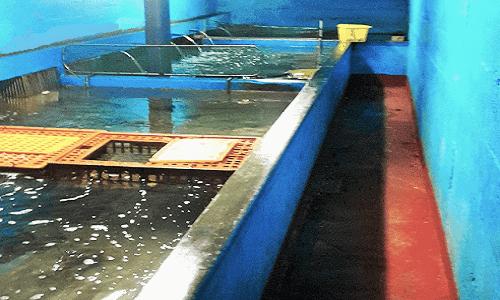 Instalaciones para depuradoras y cetáreas que sostienen un sistema depurativo imprescindible para poder consumir el marisco