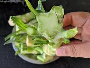 Broccoli Stem