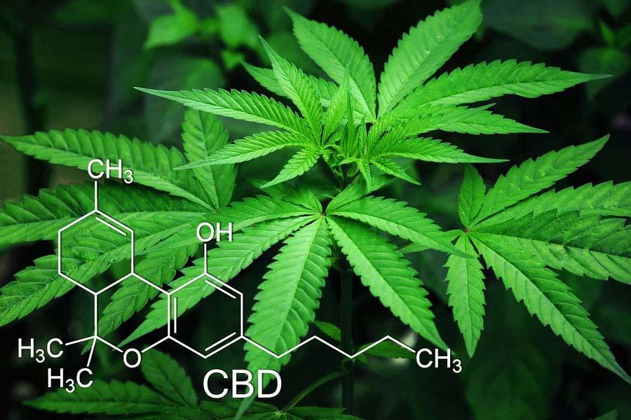Quels sont les bienfaits du CBD (cannabidiol) ?