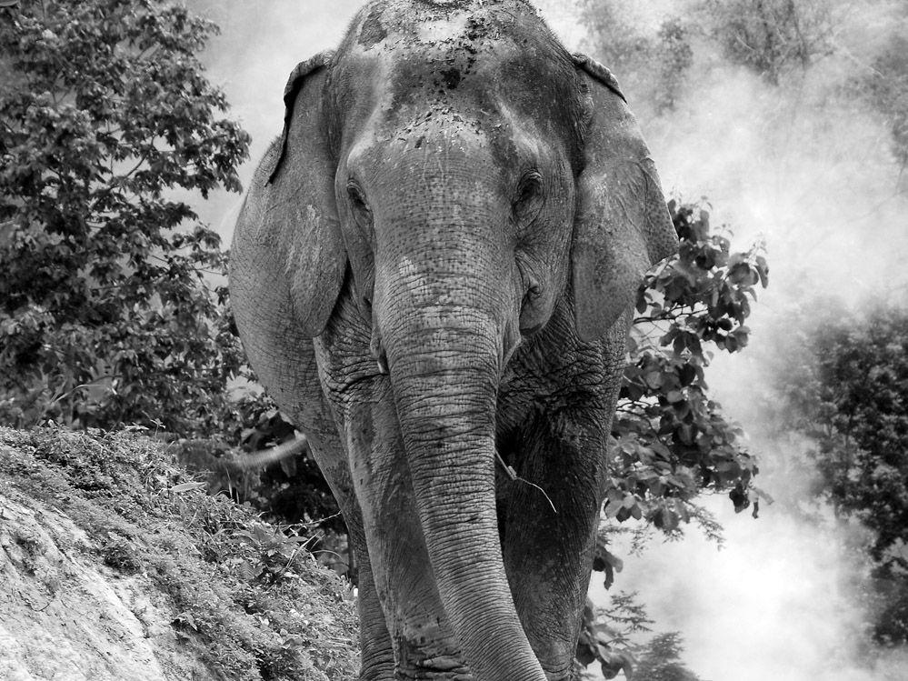 LOS ELEFANTES EN TAILANDIA: EXCURSIÓN ÉTICA DE ELEFANTES EN CHIANG MAI