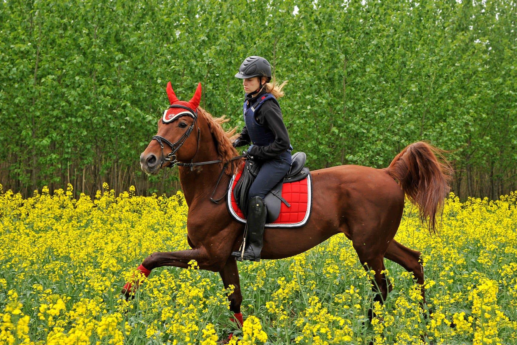 Абонемент в конный клуб «Лидер»