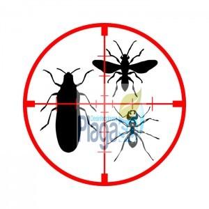Empresa eliminar insectos