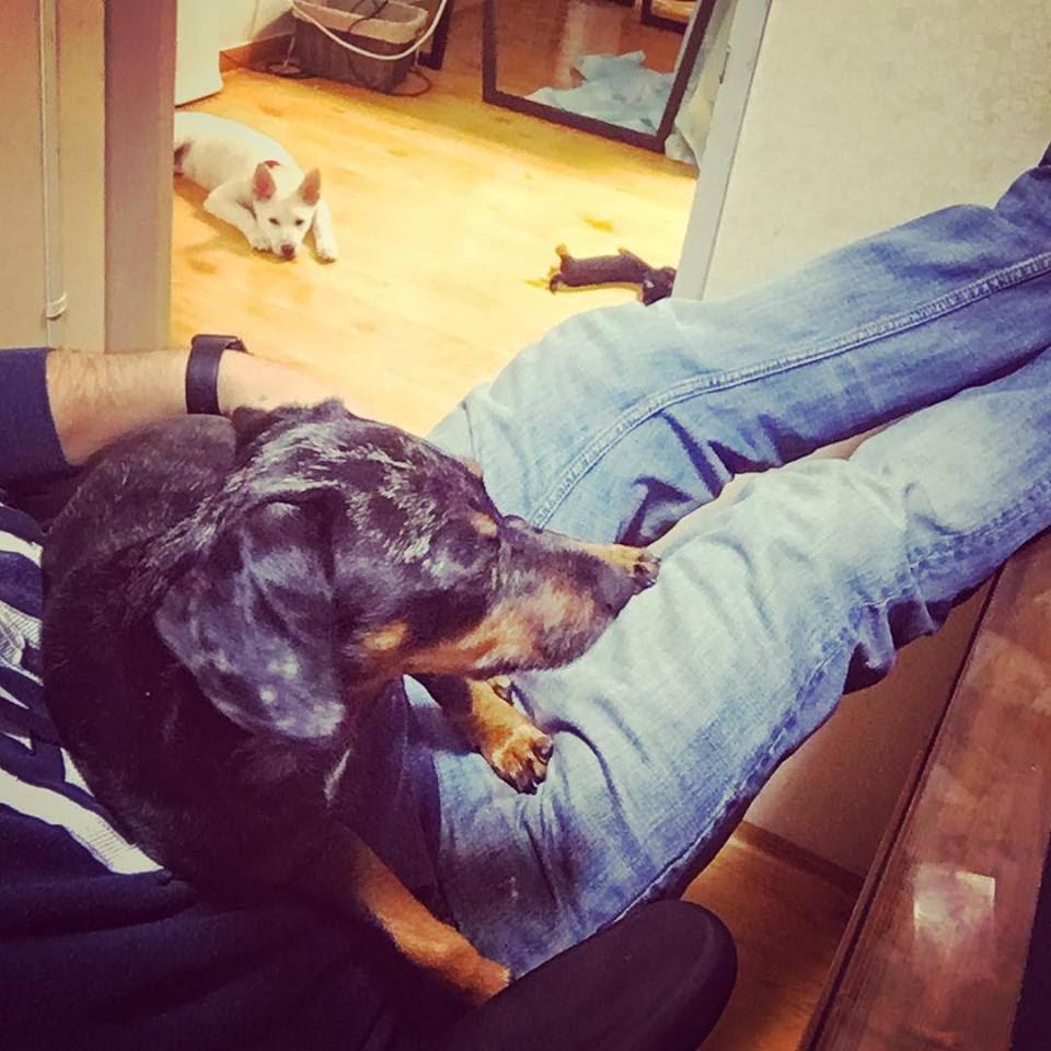 dogs - The Life of Joe - Teaching English in Korea