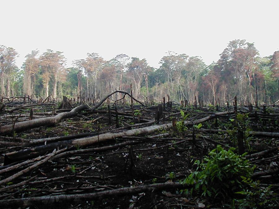 حرائق الغابات في أمريكا الجنوبية