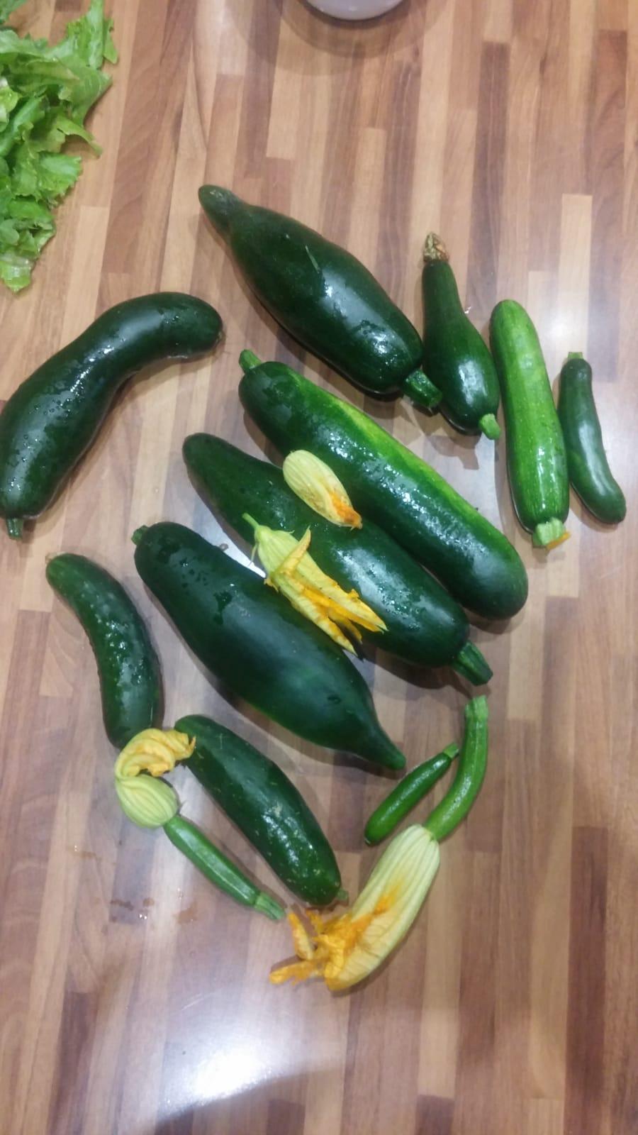 zucchine e cetrioli biologici